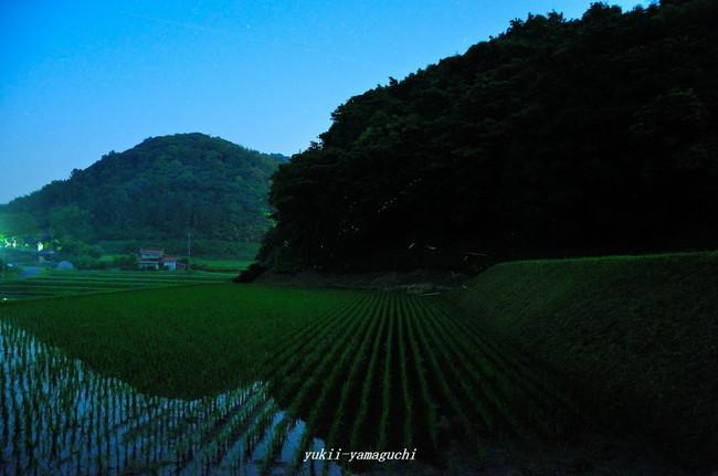 小野ほたる04.jpg