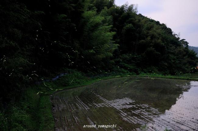 小野ほたる11.jpg