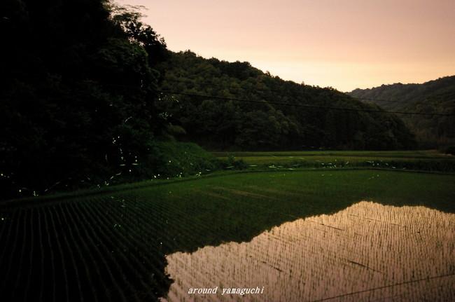 小野ほたる風景02.jpg