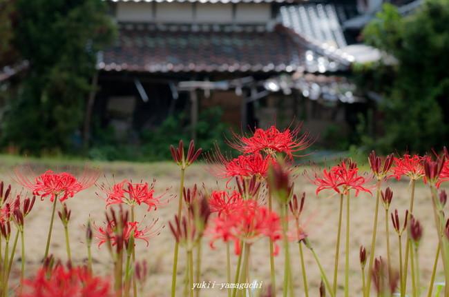 小鯖八幡宮09.jpg
