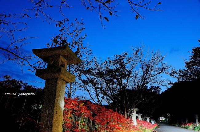 小鯖八幡宮夜02.jpg