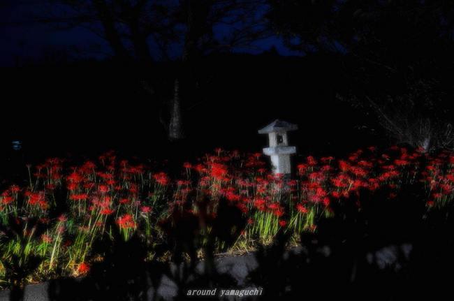 小鯖八幡宮夜031.jpg