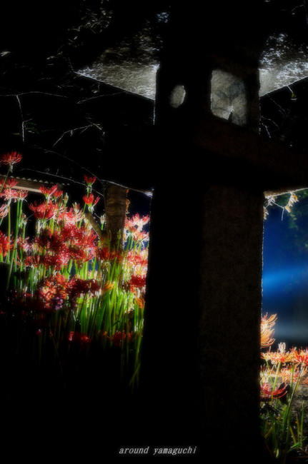 小鯖八幡宮夜061.jpg