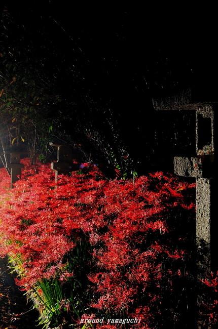 小鯖八幡宮夜09.jpg