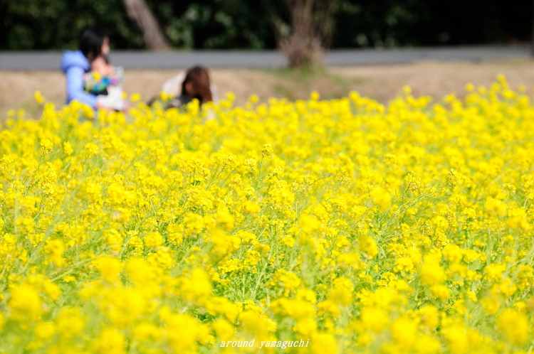 常盤公園12.jpg