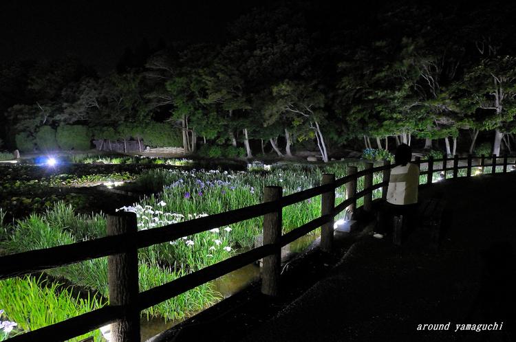 常盤菖蒲園04.jpg