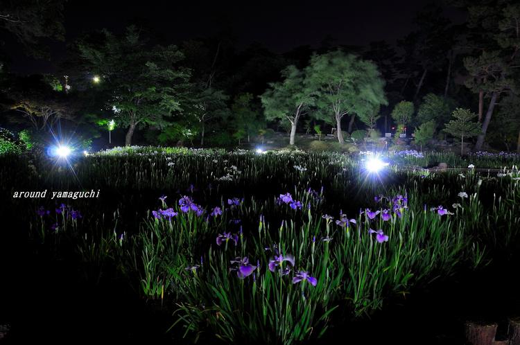 常盤菖蒲園13.jpg