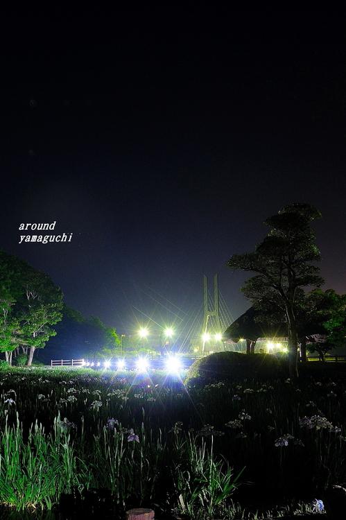 常盤菖蒲園19.jpg