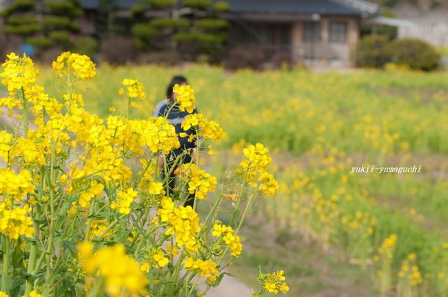 春分の日15.jpg