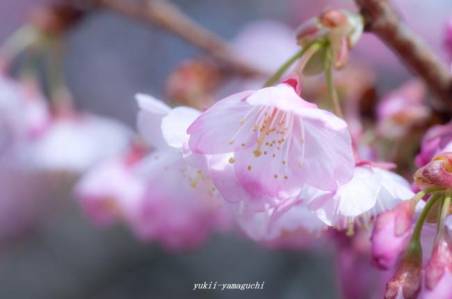 春分の日22.jpg