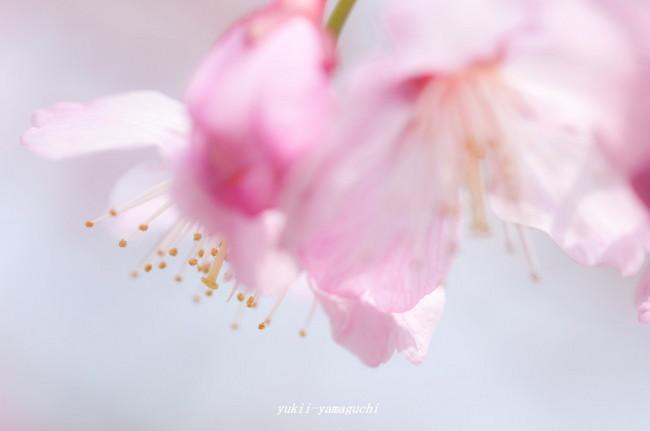 春分の日23.jpg