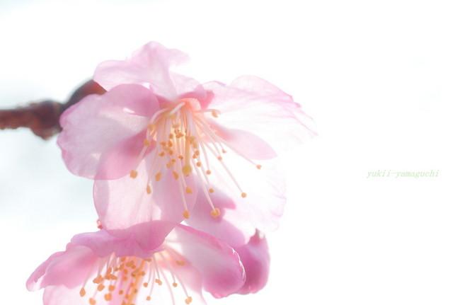 春分の日32.jpg