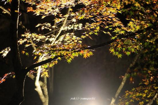 東行庵LU-07.jpg