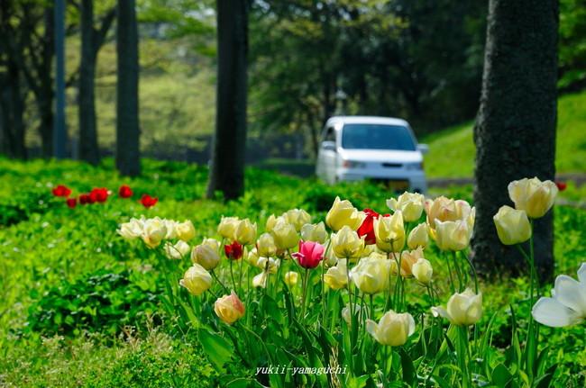 江汐公園01.jpg