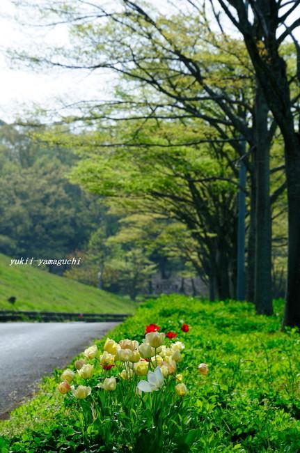 江汐公園02.jpg