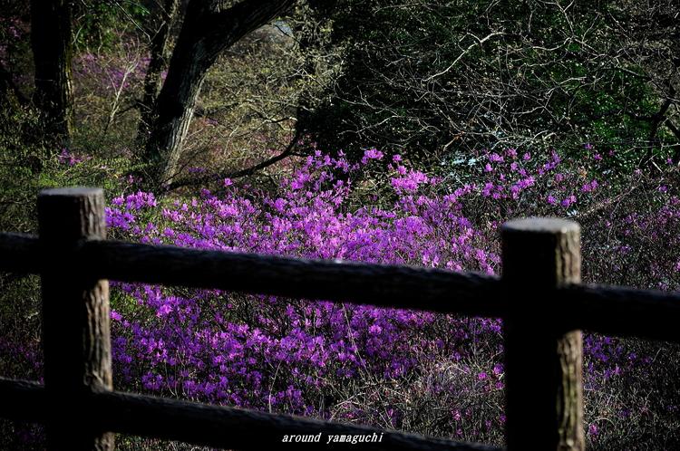 江汐公園04.jpg