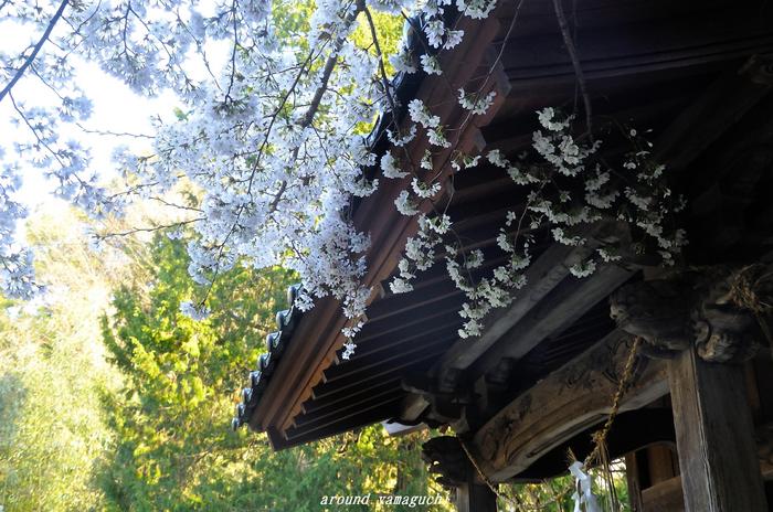 河内神社01.jpg