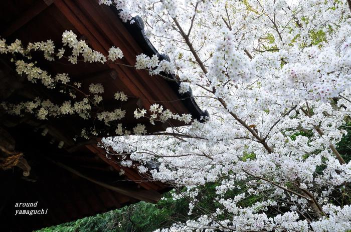 河内神社02.jpg