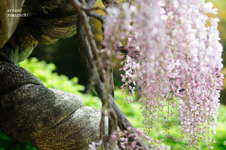 河内藤園2015 09.jpg