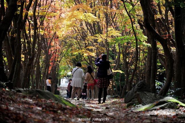 河内藤園紅葉03.jpg