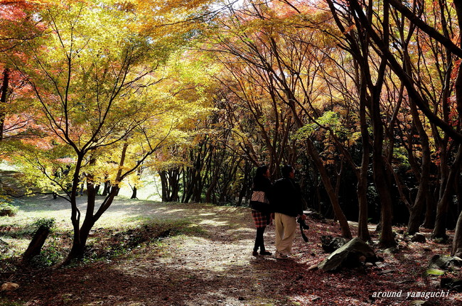 河内藤園紅葉05.jpg