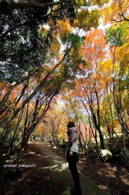 河内藤園紅葉07.jpg
