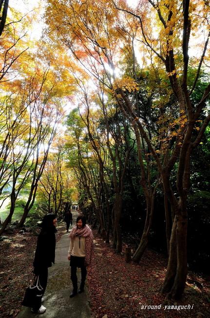 河内藤園紅葉08.jpg