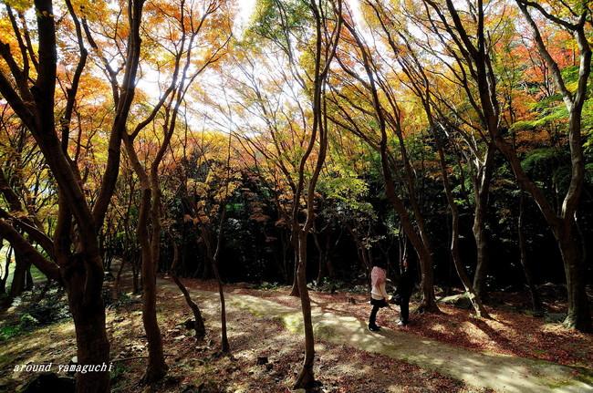 河内藤園紅葉09.jpg