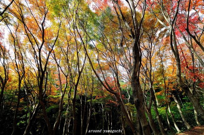河内藤園紅葉10.jpg