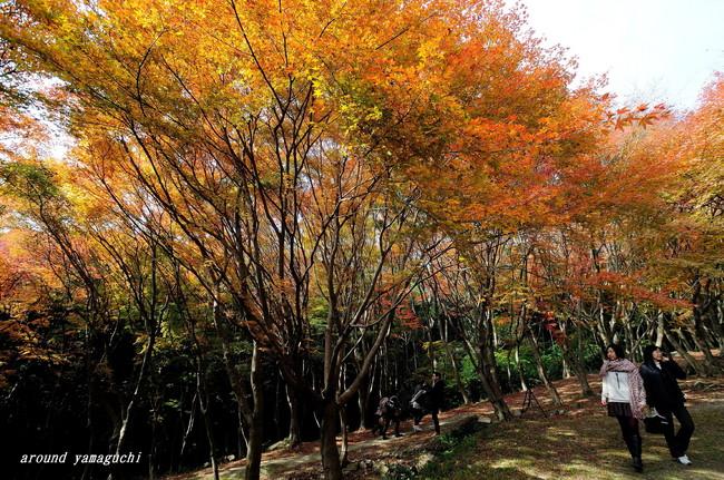 河内藤園紅葉11.jpg