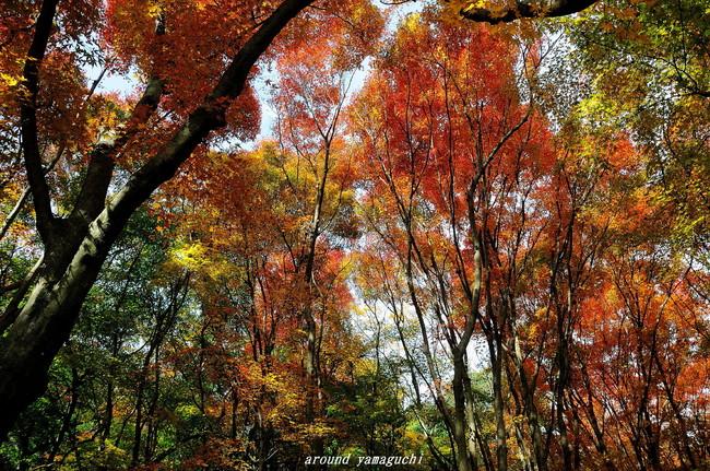 河内藤園紅葉12.jpg