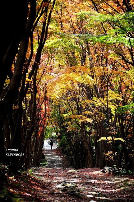 河内藤園紅葉13.jpg