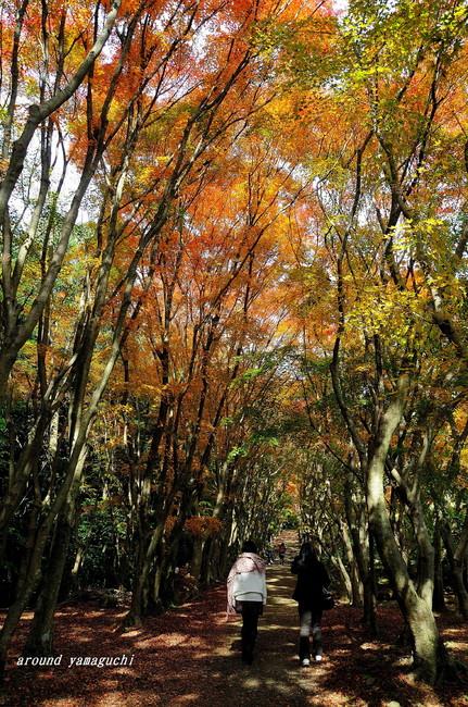 河内藤園紅葉14.jpg
