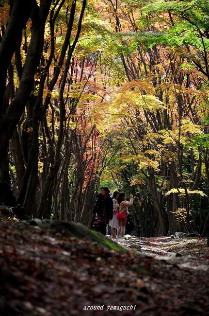 河内藤園紅葉15.jpg