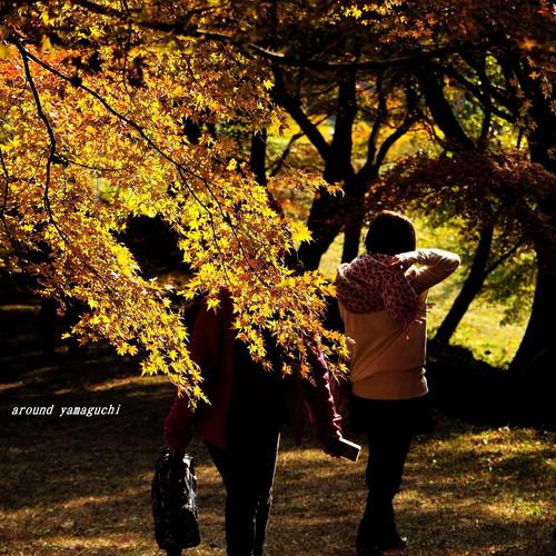 河内藤園紅葉31.jpg