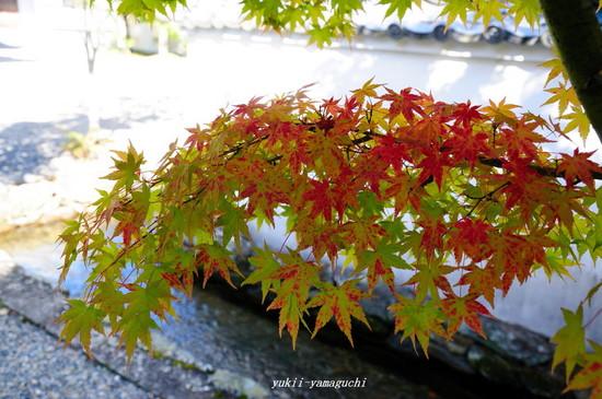 漢陽寺1101-05.jpg