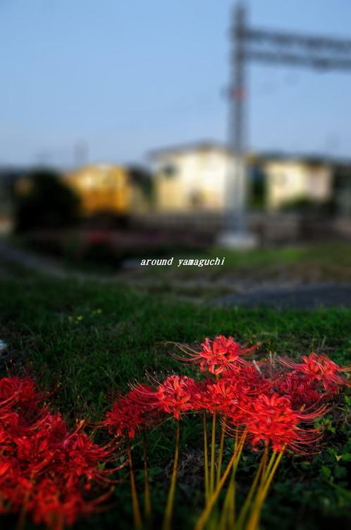 焼野07.jpg