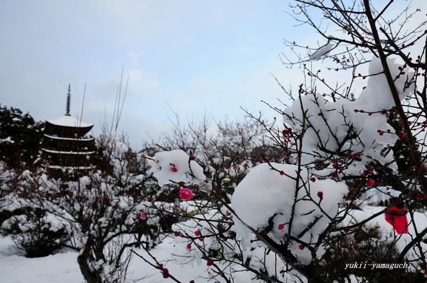 瑠璃光寺雪景色09.jpg