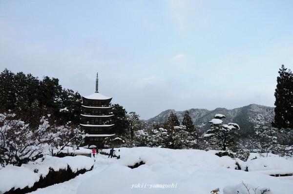 瑠璃光寺雪景色10.jpg