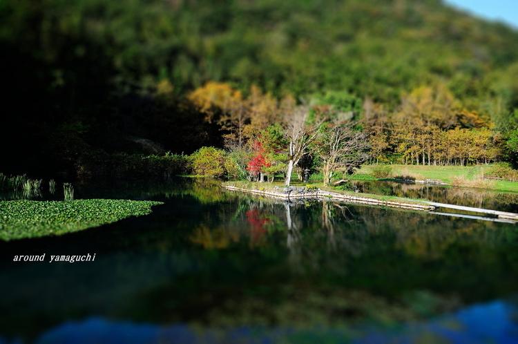 白水の池08.jpg
