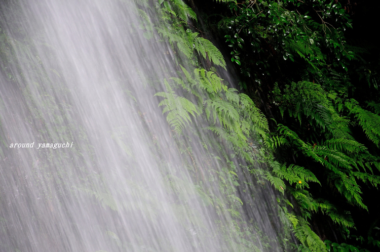 白糸の滝05.jpg