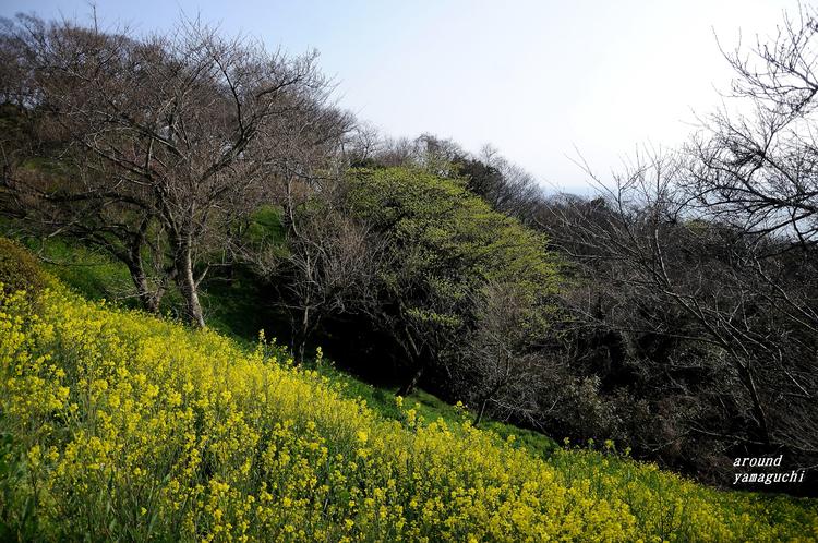 竜王山02.jpg