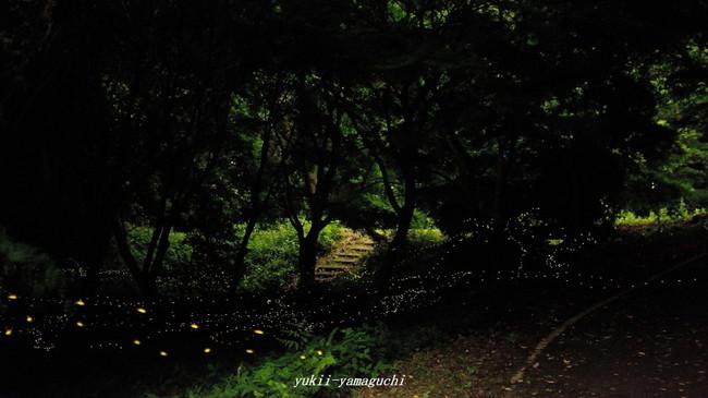 竜王山12.jpg