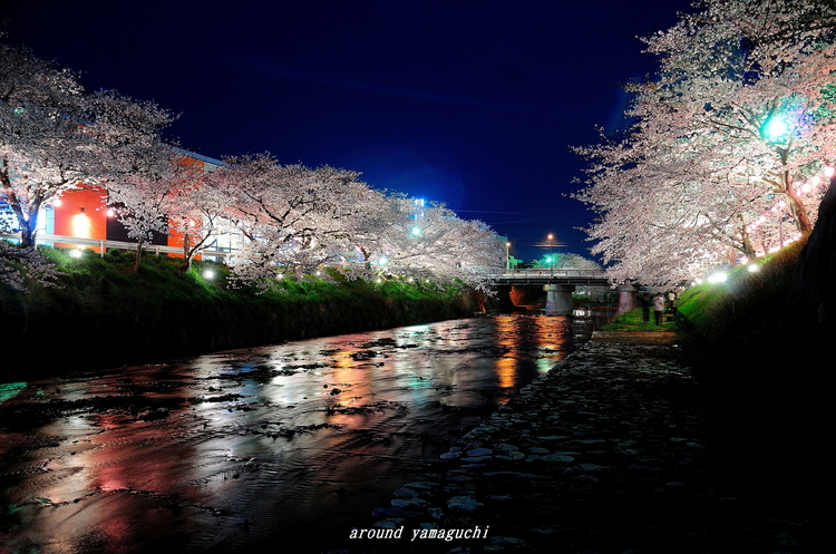 美祢さくら公園・夜01.jpg