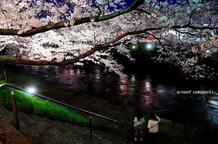 美祢さくら公園・夜06.jpg