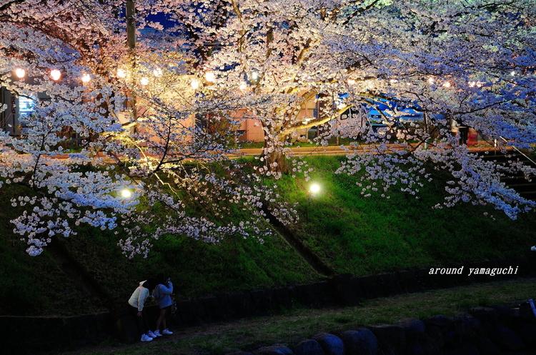 美祢さくら公園・夜07.jpg