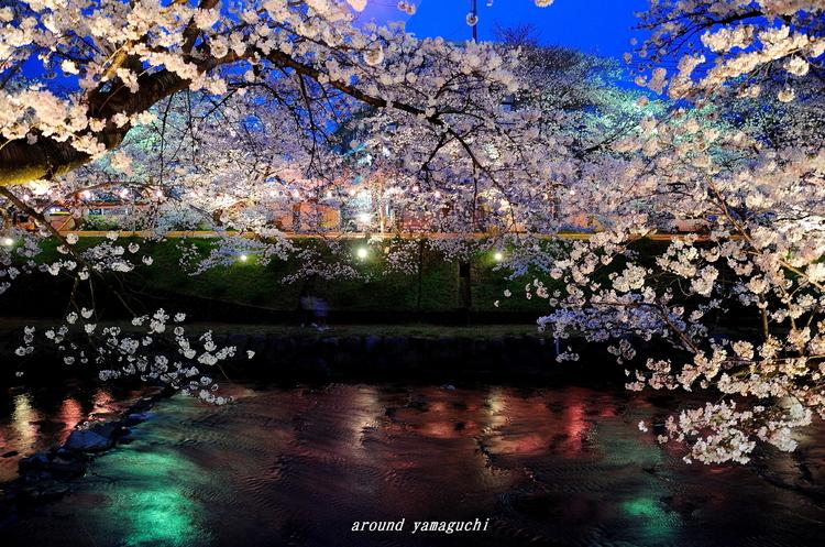 美祢さくら公園・夜08.jpg
