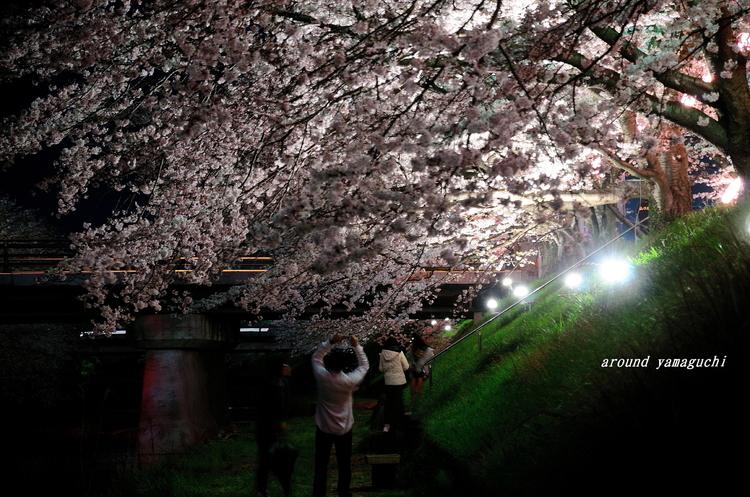 美祢さくら公園・夜12.jpg