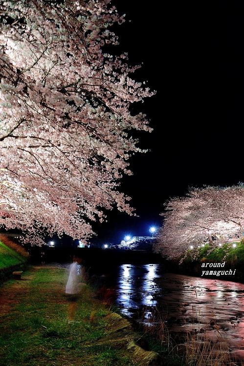 美祢さくら公園・夜14.jpg