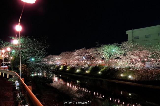 美祢夜桜02.jpg